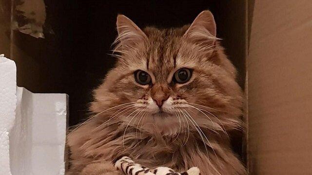 Pracownicy kawiarni często dokarmiali nieszczęsnego kota, dopóki ktoś nie zawiesił kartki na obroży