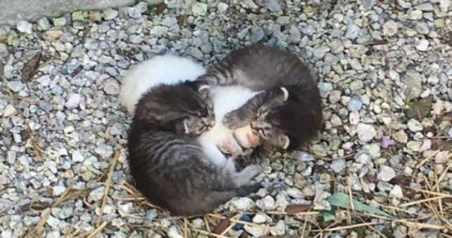 Dwa małe kocięta grzały swoją chorą siostrę najlepiej, jak potrafiły, ale wkrótce pojawiła się ich niezwykła matka
