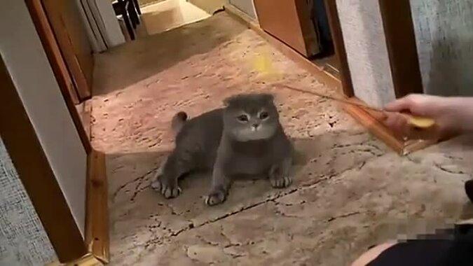Bawił się i nikogo nie dotykał. A potem zadzwonił dzwonek do drzwi. Popatrzmy na reakcję kota