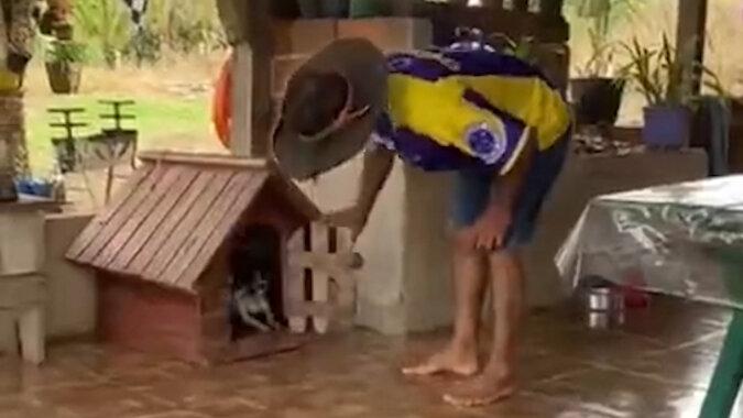 Psu nie spodobało się, że drzwi jego budki zostały otwarte. Zobacz, co zrobił
