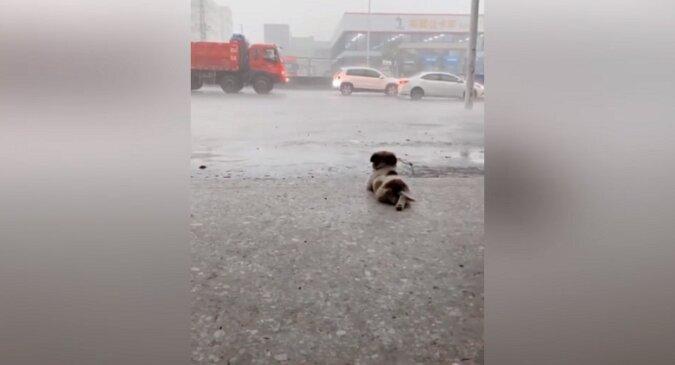 Reakcja szczeniaka na ulewny deszcz podbiła wszystkich. Niesamowite wideo