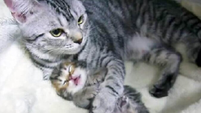 Kotka czule rozmawia z kociętami: to jest bardzo słodkie