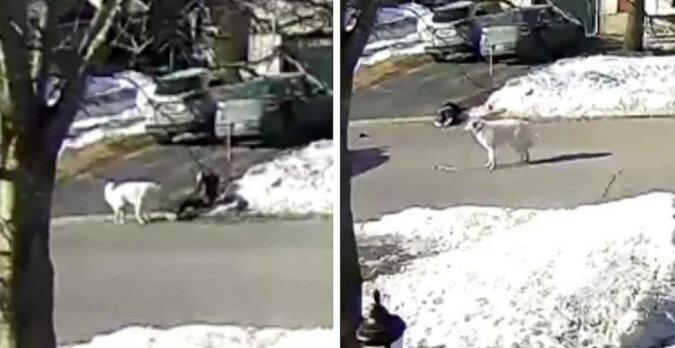 Pies uratował życie swojej właścicielce, zatrzymując ruch