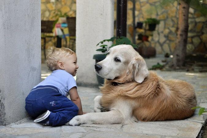 Psy wychowały dziewczynkę, a teraz uczą ją stawiać pierwsze kroki
